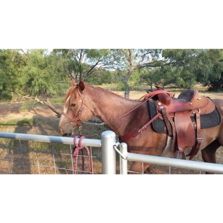 brown_buckbuster_horse_2