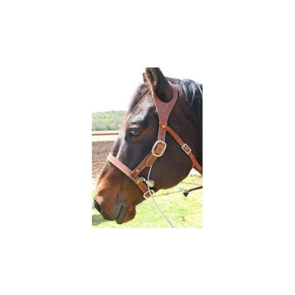 brown_horse_2