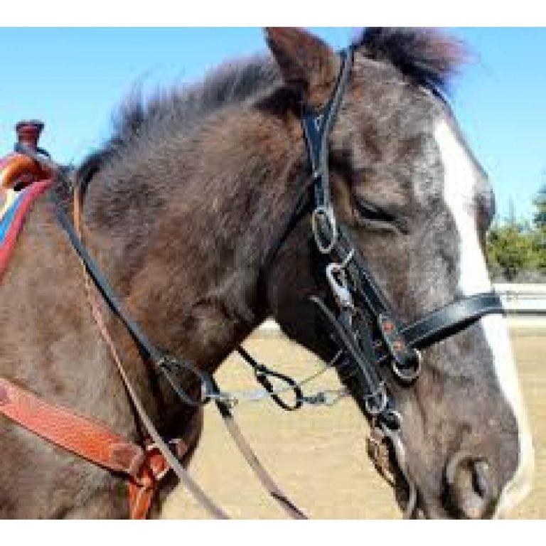 black_buckbuster_horse_2