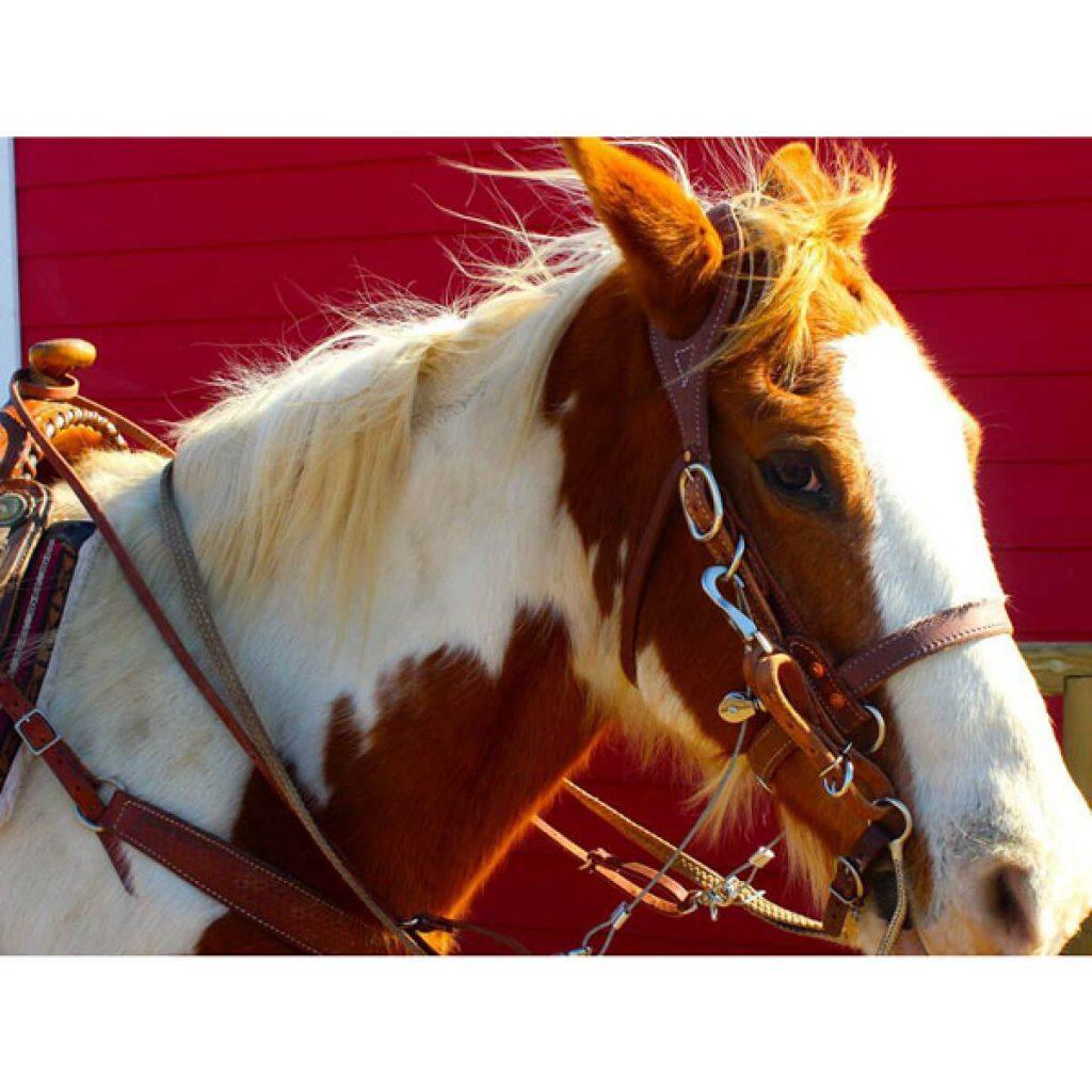 main_brown_buckbuster_horse_2